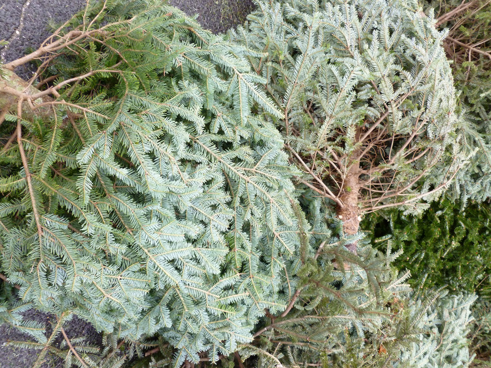 Christmas Tree Recycling Greenwich : Green technology christmas tree recycling