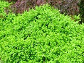 Organic Gardening – Timing Matters