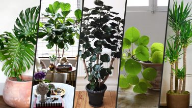 Trendy Plants That Can Purify Your Indoor Air