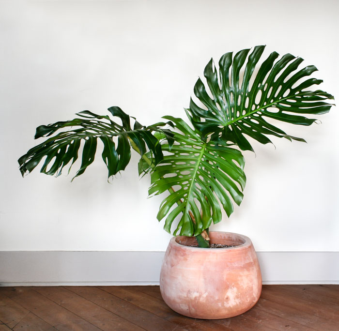 Trendy plants that can purify your indoor air sabine 39 s Large house plants